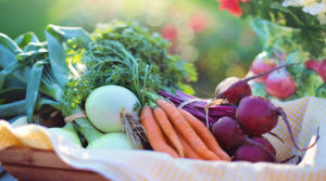 harvest 300x167 - Important Factors in Fruit and Vegetable Production ways on how to grow it