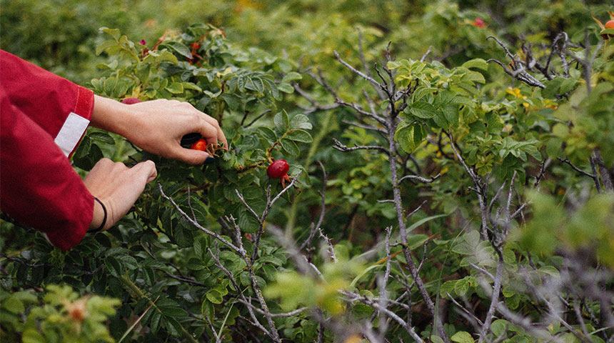 pick - 3 Best New England Farms for Fruit Picking